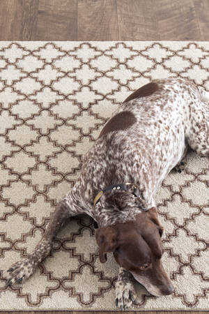 DASH & ALBERT PLAIN TIN RUG OATMEAL1